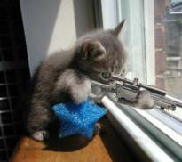 cat-shootingr.jpg