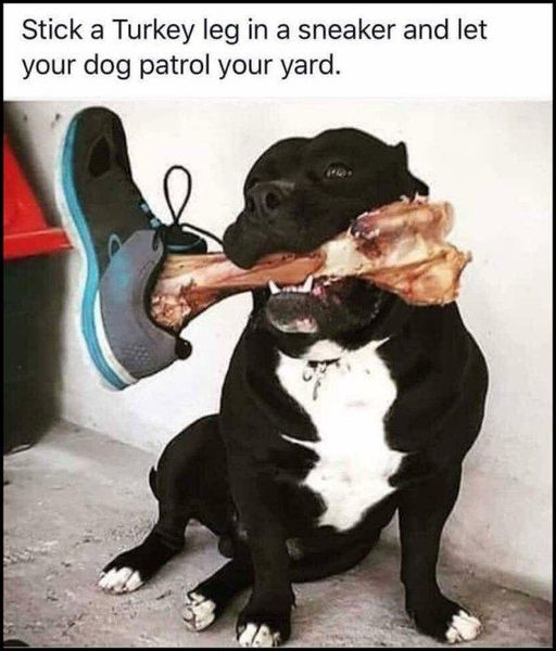 dog patrol with turkey leg.jpg