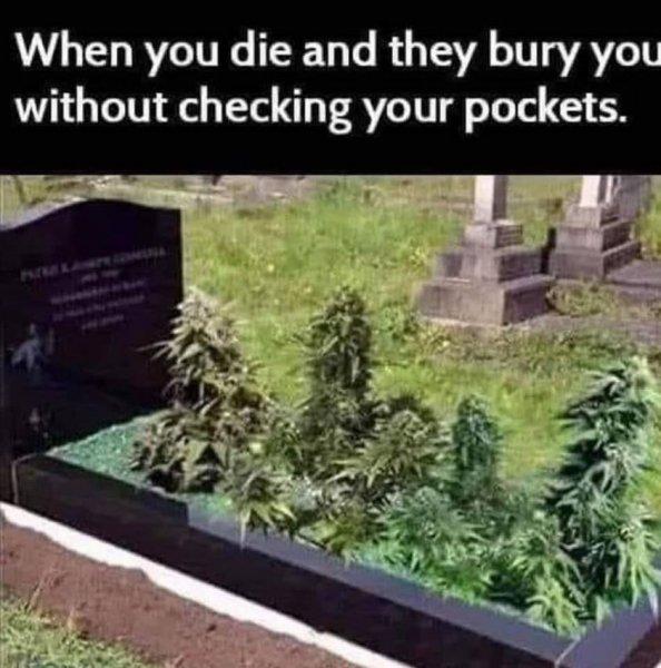 pot growing on grave.jpg