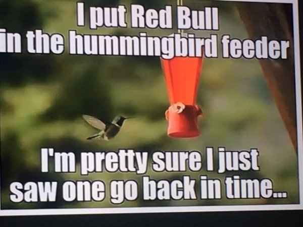 red bull in hummingbird feeder.jpg